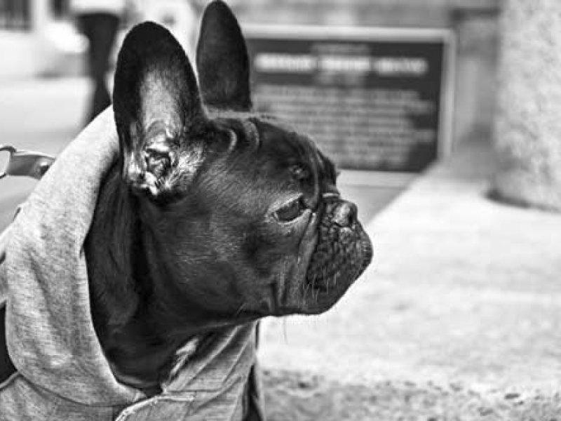 Accesorios y complementos para perros