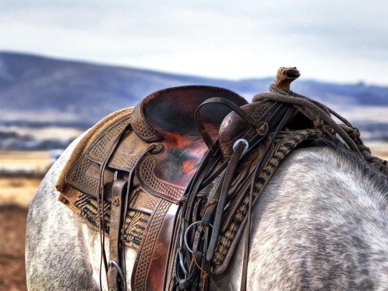 Accesorios y complementos para caballos