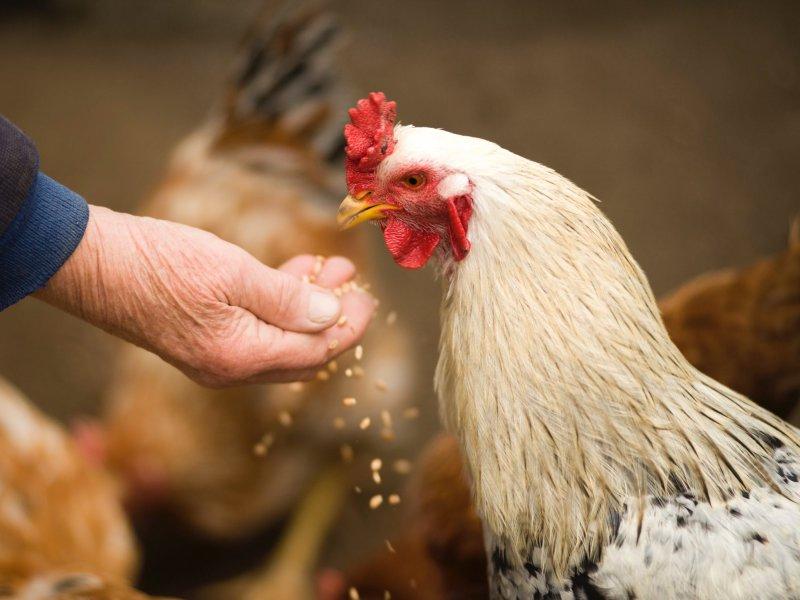 Alimentación para animales de granja